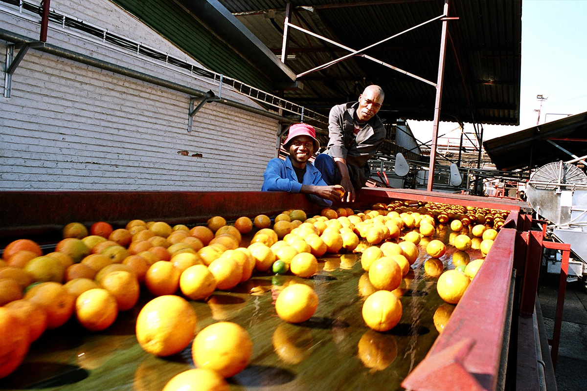 Oranges_Workers_Web