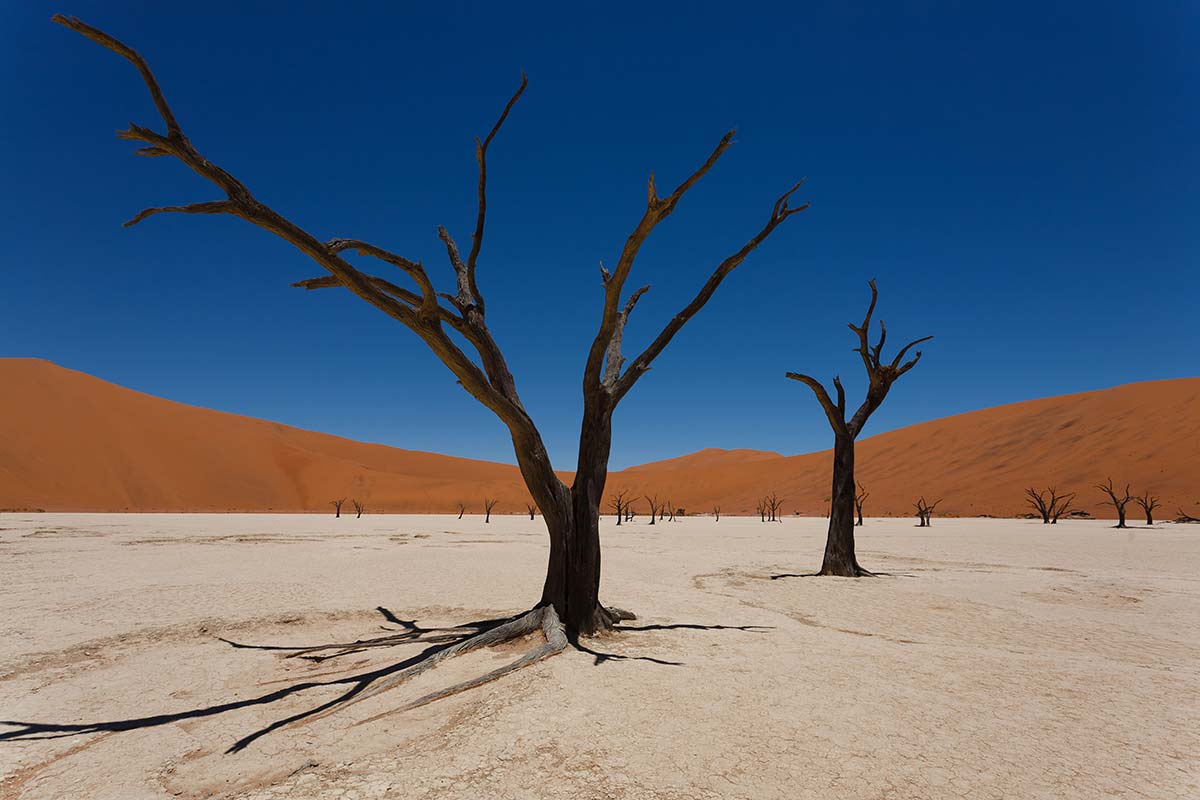 shutterstock_271777568_namibia_Web